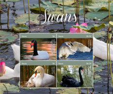 Nevis   2018  Fauna  Swans  I201901 - St.Kitts And Nevis ( 1983-...)