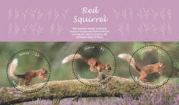 Nevis   2018  Fauna  Red Squirrel I201901 - St.Kitts And Nevis ( 1983-...)