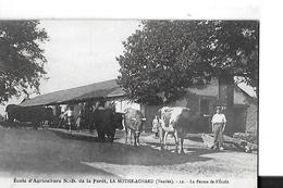 LA MOTHE ACHARD ECOLE AGRICULTURE  N.D. DE LA FORET  N 12 LA FERME ECOLE VACHES PERSONNAGES   DEPT 85 - La Mothe Achard