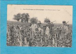 Les Vendanges En Champagne. - Les Porteurs Dans La Vigne. - Francia
