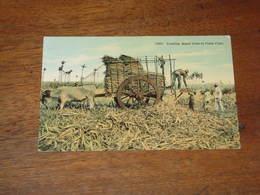 Loading Sugar Cane In FIeld / CUBA - Postcards