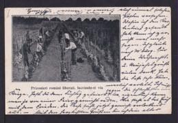 """Amtliche Rumänische Militärpost-Ganzsache Mit Bild """"Hopfenernte"""" - Gebraucht Mit Feldpost 1918 - Biere"""