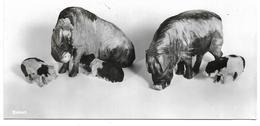 3050n: AK Schweinemotiv (Skulpturen- Siehe Beschreibung Auf Scan 2) Aus Schweden, Um 1960, Ungelaufen - Schweine