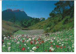 3070j: AK Thailand, Opium Field- Mohnblumen, Ungelaufen - Fiori