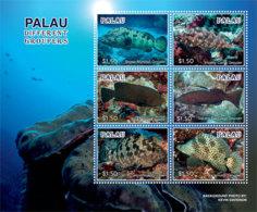 Palau 2019  Fauna Groupers Fishes  I201901 - Palau