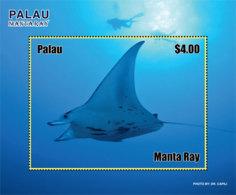 Palau 2019  Fauna Manta Ray Fish  I201901 - Palau