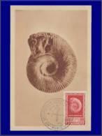 Algérie, Carte Maximum, Fossile - Cartes-maximum