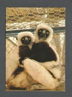 ANIMAUX - ANIMALS - MADAGASCAR - VARI VARIKANDRA FAUNE LÉMURIEN - PHOTO HOA-QUI - Autres