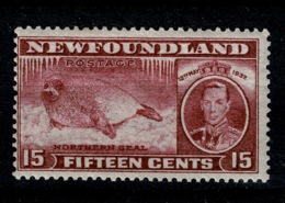 Ref 1289 - Canada Newfoundland 1937 Coronation 15c - SG 263c Perf 13.5 MNH Stamp Cat £21+ - 1908-1947