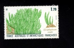 762539339 1988 SCOTT 133 POSTFRIS  MINT NEVER HINGED EINWANDFREI  (XX) FLORA ELEPHANT GRASS - Terres Australes Et Antarctiques Françaises (TAAF)