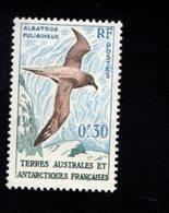 762550937 1959 SCOTT 12 POSTFRIS  MINT NEVER HINGED EINWANDFREI  (XX) LIGHT MANTLED SOOTY ALBATROSS BIRDS - Terres Australes Et Antarctiques Françaises (TAAF)