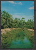 POSTCARD SAUDI IRRIGATION CANAL IN AL QATIF - Saudi Arabia