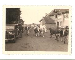 Marnay - 71 - Vaches - Vieille Voiture - Snpashot - Vintage - Lieux