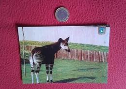 SPAIN ESPAGNE TARJETA POSTAL POST CARD MADRID FISA ESCUDO DE ORO ZOO CASA CAMPO OKAPI PARQUE ZOOLÓGICO ZOOLOGIQUE VER FO - Animales