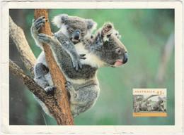 FEMALE KOALA BEAR WITH YOUNG, AUSTRALIA - Bears