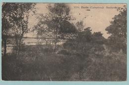 Heide : Boschzicht - Kalmthout