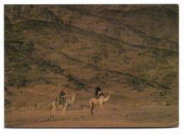 SAUDI ARABIA POSTCARD CAMELS IN THE MOUNTAINS WEST OF TABUK - Saudi Arabia