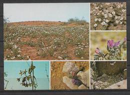 SAUDI ARABIA POSTCARD DESERT FLOWERS - Saudi Arabia