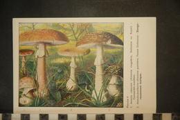 CP, CHROMOS, Planche N°V,   Champignon Extraite Des Champignons D' Europe Par Roger Heim - Trade Cards