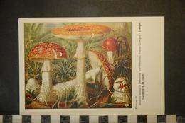 CP, CHROMOS, Planche N°IV,   Champignon Extraite Des Champignons D' Europe Par Roger Heim - Trade Cards