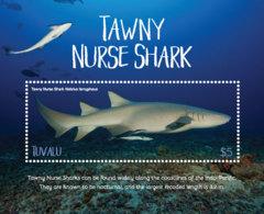 Tuvalu 2018 Fauna  Tawny Nurse Shark ,fishes  I201901 - Tuvalu