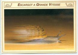 81440 LAUTREC Musée De L'escargot Et élevage - Lot De 2 CPM - Voir Détails Dans La Description - Elevage