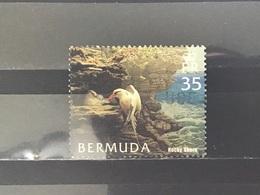 Bermuda - Vogels (35) 2005 - Bermuda