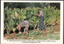 46 - BRENGUES - Débourgeonnement De Plants De Tabac Dans La Vallée Du Célé - 1987 - France