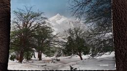 CPSM ARBRE ARBRES LE MONT DORE SANCY 63 GARE DU TELEFERIQUE AIGUILLES DU DIABLE ED LA CIGOGNE 1967 - Trees