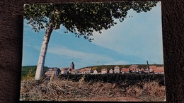 CPSM ARBRE ITTERSWILLER BAS RHON 67 VUE GENERALE ED MARASCO - Trees