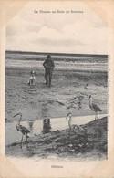 80. N°55456.hérons.la Chasse En Baie De Somme - France