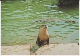 Postcard - Otters - KIlverstone Wildlife Park Card No..r6614  - Unused Very Good - Postcards