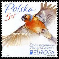 2019 Poland, Europa, CEPT, National Birds, Stamp, MNH - 2019