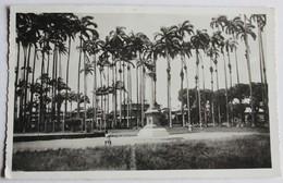 CPSM Guyane Française Cayenne Place Des Palmistes Qualité Photo 1953 - Cayenne