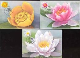 Moldova 2019 Water Lilies Flowers Definitives 3 Maxicards - Moldova