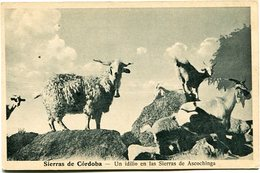 SIERRAS DE CORDOBA - UN IDILIO EN LAS SIERRAS DE ASCOCHINGA. ARGENTINA POSTALE CPA CIRCA 1910's NON CIRCULÉ - LILHU - Argentine
