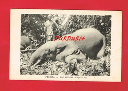 AFRIQUE GABON PEREIRA LAC AZINGO Eléphant Tué - Gabon