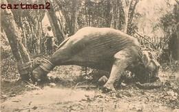 SRI-LANKA CEYLAN A STRUGGLING ELEPHANT CHASSE HUNT CEYLON INDE INDIA - Sri Lanka (Ceylon)