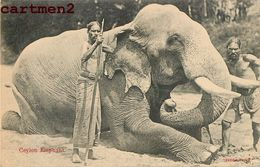 SRI-LANKA CEYLAN ELEPHANT CEYLON INDE INDIA - Sri Lanka (Ceylon)