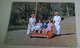 FUNCHAL CARRO DO MONTE (298) - Folklore