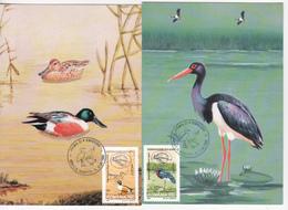 1999 , Roumanie Romania  Europa Birds  Fauna , 2 Maxicards - Europa-CEPT