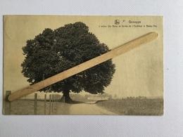 GENAPPE Nº 21 L'ARBRE Ste Anne Et Ferme De L'Auditeur à Baisy-Thy 1928(Édit E.P. Dohet- Baude,Genappe)NELS. - Genappe