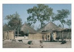SENEGAL/CONCESSION EN BROUSSE (dil261) - Senegal