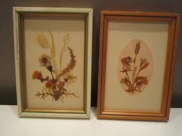 Deux-cadres-fleurs-séchées-dont-un-signe-16-5-x-11-5-cm-env-et-16-5-x-11-cm-env Miniature 1  Deux-cadres-fleurs-séchées - Other Collections