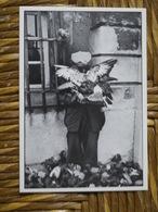 ARLES GUY LE QUERREC HOMME AUX PIGEONS MAIRIE - Arles