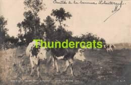 CPA PHOTO SALON DE PARIS 1901 A PEZANT SOIR DE PLEINE LUNE VACHE COW - Musées
