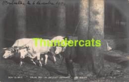 CPA PHOTO SALON DE PARIS 1901 A JACQUOT DEFRANCE LES BOEUFS VACHE COW - Musées