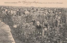 CPA:VENDANGEURS AU VENDANGE DES PLUS GRANDS VINS DE BOURGOGNE NUITS SAINT GEORGES (21)..ÉCRITE - Wijnbouw