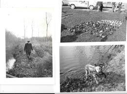 OFFOY ( Somme)  3 Photos De CHASSE  Années 60        -  CHIEN Et TABLEAU DE CHASSE - Places