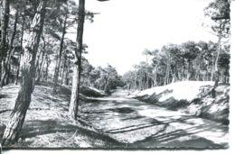 N°72843 -cpsm Saint Trojan Mes Bains -la Route En Forêt- - Ile D'Oléron